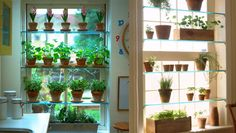 We watched the Forks Over Knives film last night and were really inspired. One great idea coming out of that is to convert the right hand tall and narrow window reveal into a salad growing area. Th...