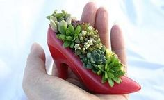 Quirky succulent container.  #quirky #unique #succulent #container #garden