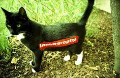 A Photo by satomi - Lomography