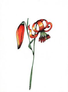 """TIGER LILY""  original 9x12 pen and ink illustration by Ming Schipper.  #elementedenartsearch"