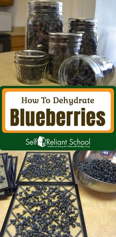Step by step directions for dehydrating blueberries. Dried Blueberries, Dried Fruit, Canning Food Preservation, Preserving Food, Dehydrated Food, Dehydrated Vegetables, Backpacking Food, Dehydrator Recipes, Vegan Recipes
