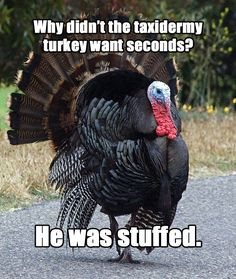 "Meet ""Terrible Thanksgiving Pun Turkey"""
