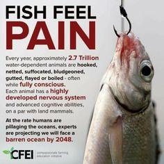 Yes, I'm vegan. No, I don't eat fish. Vegan Facts, Vegan Memes, Vegan Quotes, Orcas, Animal Liberation, Reasons To Go Vegan, Life Is Precious, Why Vegan, Stop Animal Cruelty