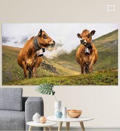 Deze twee koeien stonden hoog op een berg in de Franse Alpen. Beiden met een grote zware koeienbel om hun nek. Er liep verderop een hele kudde, allemaal met verschillende klokken en geluid. Tot ver was het geklingel van de grazende koeien met hun bellen te horen.