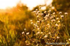 blumen in der Natur im Sonnenlicht - Blumenwiese