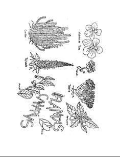 Resultado de imagen de CANARIAS dibujo