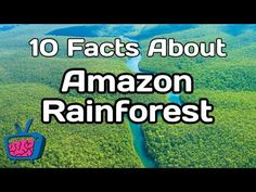 Learn all about the Amazon Rainforest for kids with this fun post on one of our earth's greatest treasures through videos and a free printable mini book.