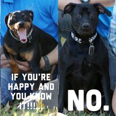 My dogs faces during engagement photos. Happy happy doggy not so happy doggy! Funny dog pictures
