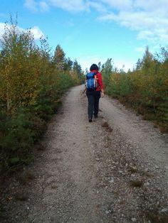 Hiking trail 'Tour Grundrämmen' 2 hours, start by Tyngsjö Vildmark, Dalarna, Sweden.
