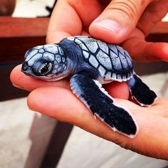 Imagen de turtle, animal, and baby