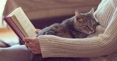 Der Parasit ´Toxoplasma gondii´ macht es sich in Katzen gemütlich, aber auch in vielen Menschen. Bislang galt er als relativ harmlos. Forscher haben herausgefunden, dass er jedoch in der Lage ist das menschliche Verhalten zu steuern. Mit fatalen Folgen.