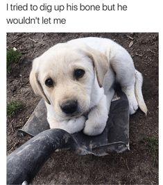 Funny Animal Memes, Dog Memes, Cute Funny Animals, Cute Baby Animals, Funny Cute, Animals And Pets, Funniest Memes, Animal Humor, Hilarious Memes