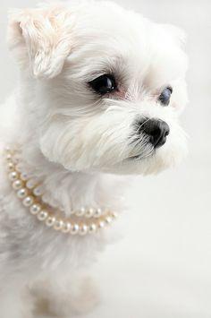 .This looks like my Bella la gosie