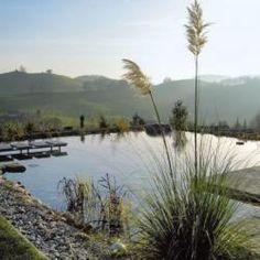 Alcuni esempi di biopiscine: un'evoluzione green delle piscine tradizionali.