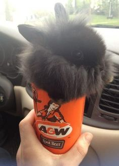 Bunny cup Pinned From Junglegag - Click for more!
