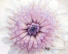 Daisy Photograph, Fine Art Nature Photograph, Macro Photo by LMRPhotography for $25.00, #zibbetflash, #flowerphoto, #naturephoto