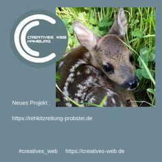 Kangaroo, Pandora, Creative, Animals, Hamburg, Deer, Projects, Baby Bjorn, Animales