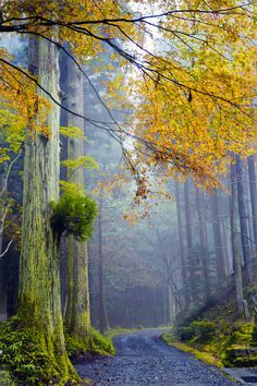 Misty Path, Japan photo via forest / Woods Are Lovely, Dark, and Deep on imgfave Beautiful World, Beautiful Places, Beautiful Forest, Simply Beautiful, Amazing Places, Foto Nature, Magic Places, Japan Photo, Tree Forest