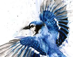 Image result for blue jay watercolor