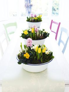 living centerpiece - tulips, hyacinth, and primrose