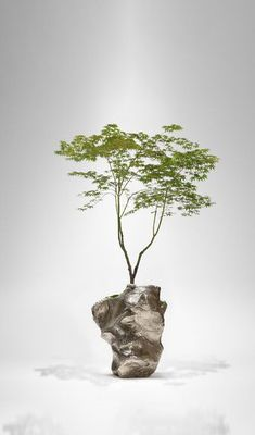 Pine LSA International Forest Vaso