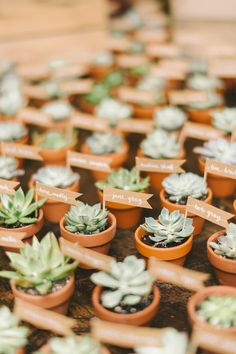 Potted Succulent Escort Card Favors Honey Wedding Favors, Succulent Wedding Favors, Wedding Gifts For Bride And Groom, Creative Wedding Favors, Custom Wedding Gifts, Wedding Favors For Guests, Personalized Wedding, Handmade Wedding, Wedding Flowers