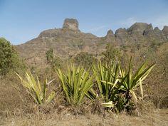 Vue du jardin botanique..les sisals  Santiago - Cap Vert