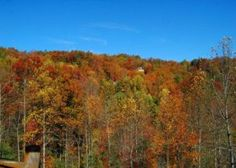 3 Groups Who Will Love Staying in Large Group Cabins in Pigeon Forge TN This Fall