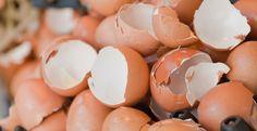 Yumurta Kabuğu Deyip Geçme! Çöpe giden yumurtaİ kabuklarıyla aslında birçok şey yapılabildiğini biliyor muydunuz? Her evde kahvaltıda veya diğer yemek saatlerinde kullandığımız yumurtaların kabuklarını atmadan önce bir daha düşünün. Yumurta kabuklarında yüksek miktarda kalsiyum karbonat bulunur. Mineral yapıları da yemekler haricinde kullanılmalarını bu yüzden sağlar. Kompostlama. Yumurtaİ kabukları kolaylıkla parçalandığından, kompostlama için idealdir. İçerdikleri konsantre mineraller…