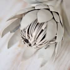 Image result for protea flower paintings