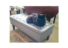 cats, enjoying antique furniture | ... . Is it just me or do cats have a soft spot for our Bouji Collection