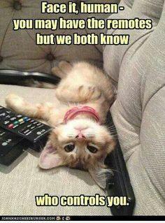 MOL! (MeowOutLoud!) >^,,^