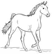 Cavalo Árabe Cinzento Página para colorir