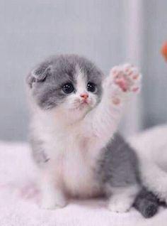 cat, cute, and kitten resmi