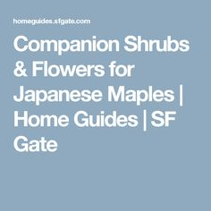 Companion Shrubs & Flowers for Japanese Maples | Home Guides | SF Gate