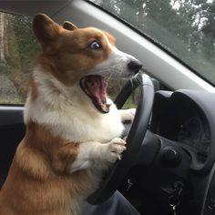 The inimitable moment when one driver realizes that he's been going a bit too fast. Oh, and the driver happens to be a Corgi...