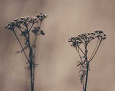 Much Ado About Nothing by Nina Lindfors, via Behance Autumn Lights, Behance, Landscape, Scenery, Corner Landscaping