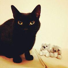 black cat & his friends