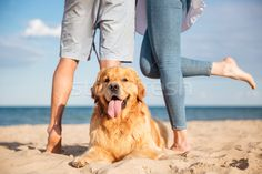 Closeup of beautiful dog lying on the beach stock photo (c) deandrobot (#7410338) | Stockfresh