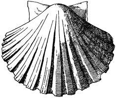Exterior Scallop Shell | ClipArt ETC