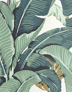 """Habitually Chic® - """"The Original"""" Martinique Banana Leaf wallpaper, which was created by decorator Don Loper in 1942 for the Beverly Hills Hotel, has since developed an iconic status amongst the design world. Estilo Tropical, Tropical Style, Tropical Design, Palm Wallpaper, Fabric Wallpaper, Tropical Wallpaper, Print Wallpaper, Wallpaper Ideas, Illustrator"""