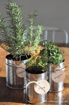 Could use tins of herbs in cans to decorate tables - something different! By the Brook B&B www.bythebrookbnb.com