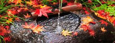 Autumn Leaves in Stream Facebook Cover