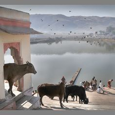 Early Morning in Pushkar