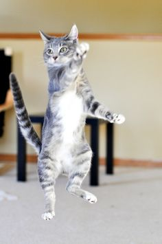 You put your right paw in, you put your right paw out, you do the hokey poky and you shake it all about!!