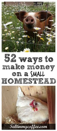 52 great ideas for increasing income from a small homestead. Excellent brainstorming resource for anyone with a mini homestead, or even a big backyard! How to make money homesteading; how to make money on a small farm; homestead how to Homestead Survival, Homestead Farm, Homestead Gardens, Farm Gardens, Survival Tips, Homestead Living, Homestead Layout, Veggie Gardens, Survival Quotes