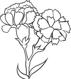 """Step Learn How to Draw Carnations FREE Step-by-Step Online Drawing Tutorials, Flowers, Pop Culture free step-by-step drawing tutorial will teach you in easy-to-draw-steps how to draw """"How to Draw Carnations"""" online. Flower Drawing Tutorial Step By Step, Flower Drawing Tutorials, Flower Step By Step, Flower Tutorial, Drawing Flowers, Flower Drawings, Drawing Ideas, Drawing Guide, Drawing Step"""