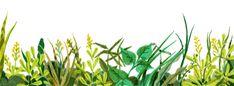 Modern Farmer on Behance Floral Illustrations, Book Illustration, Botanical Illustration, Modern Farmer, Herbs, Nature, Plants, Image, Sketch