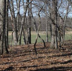 Oak Grove by avardwoolaver