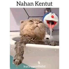 Wow Video, Cats, Animals, Gatos, Animales, Animaux, Animal, Cat, Animais